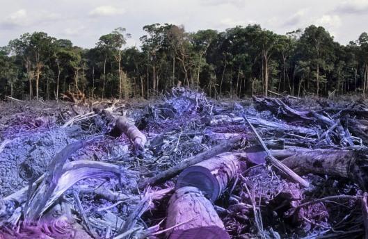 EvilDeforestation